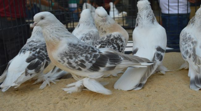 20 Yıldır Kuşlarına Gözü Gibi Bakıyor