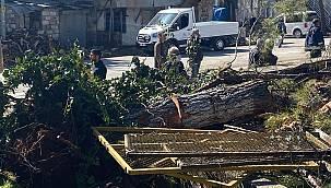 Adıyaman Köy Hizmetleri bahçesinde Ağaç Katliamı.
