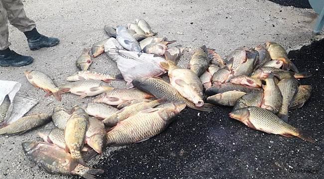 Balık katliamı ' na Kim Dur Diyecek !!!