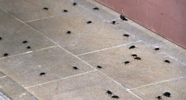 Adıyaman'da Böcek İstilası Korkuttu - Videolu Haber