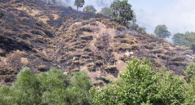 Adıyaman'da Örtü Yangınında 5 Hektar Kül Oldu