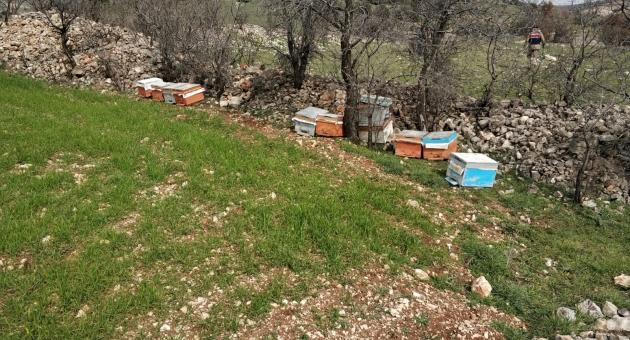 Arı Kovanlarını Çalan Zanlı Tutuklandı