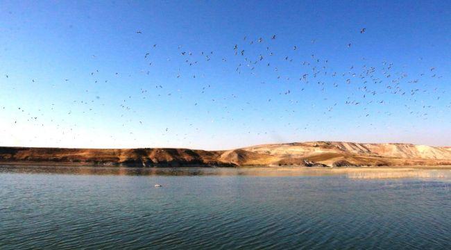 Atatürk Barajı'nın Yazlık Misafiri Martıların Göçü Başladı - Videolu Haber