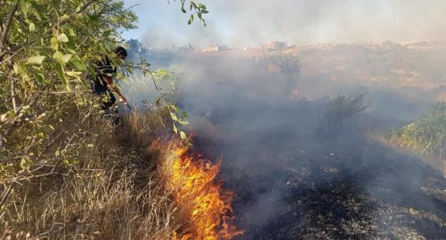 Bahçede Çıkan Yangında Çok Sayıda Ağaç Yandı