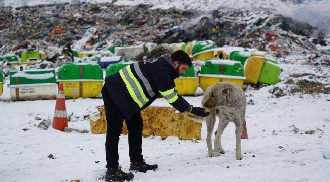 Belediye Ekipleri Sokak Hayvanlarına Yem Bıraktı