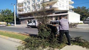 Bulvarlarda ağaçlara trafik düzenlemesi