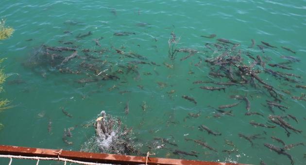 Burası da Kahta'nın Balıklı Göl'ü