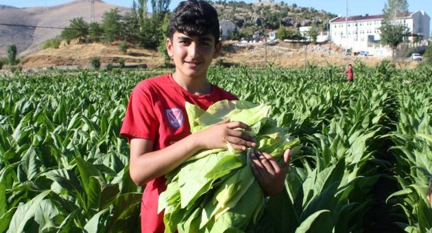 Çelikhan'da Tütün Tarlasından Hokey Milli Takıma