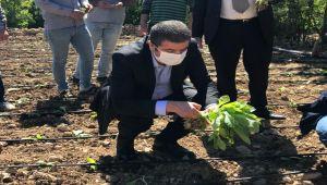 CHP'li Tutdere: Çiftçiler Üretmeye Devam Edebilmesi İçin Desteğe İhtiyacı Var