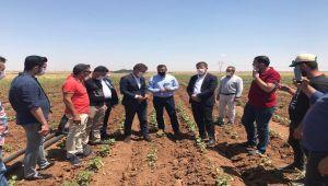 CHP'li Tutdere: çiftçilere zulmediyorlar - Videolu Haber