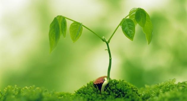 Dünyadaki Yeşillenme 20 Yıl Önce Durdu