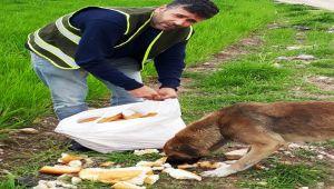 Fahri Av Müfettişi Sokak Hayvanların Karınlarını Doyurdu
