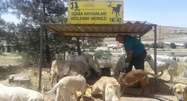 Gaziantep Büyükşehir, Sokak Hayvanlarını Unutmuyor