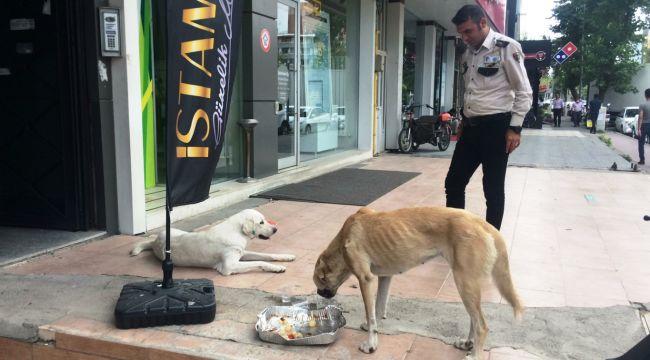 Güvenlik görevlisi, öğle yemeğini sokak köpekleriyle paylaştı - Videolu Haber