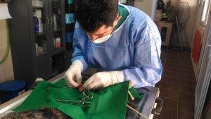 Hasta Kedi Operasyonla Sağlığına Kavuştu