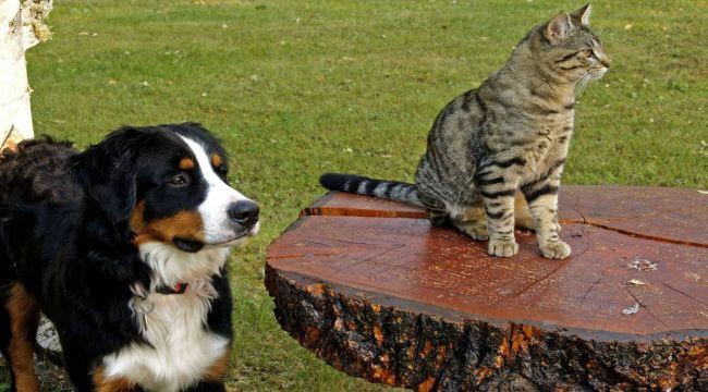 Hayvan Davranışlarından Depremi Tahmin Etmek Mümkün