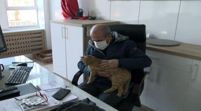 Hayvansever okul müdürü makamında beslediği kedilere gözü gibi bakıyor - Videolu Haber