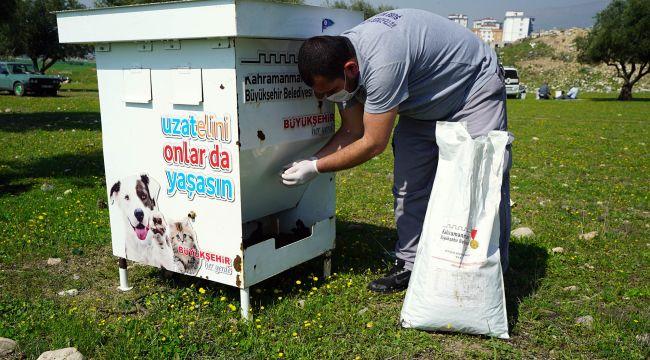 Kahramanmaraş Büyükşehir Belediyesi Sokak Hayvanlarını Unutmadı
