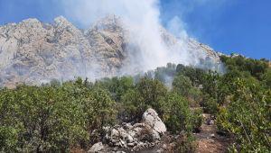 Kahta'da 100 dönüm alandaki fıstık ağaçları kül oldu