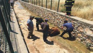 Kahta'da su kanalına düşen inek itfaiye ekiplerince kurtarıldı