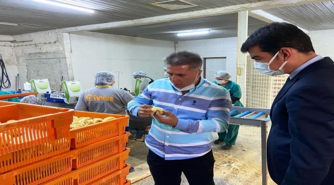 Kaymakam Köksal, civciv üretim tesisini inceledi