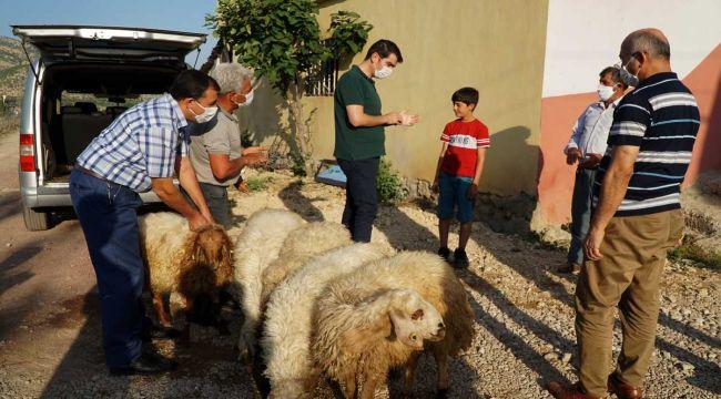 Kaymakam Köksal, keçileri ölen küçük Barış'a 5 kuzu hediye etti