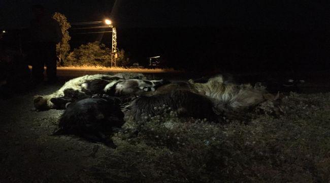 Otomobil keçi sürüsüne çarptı: 1 yaralı, 22 keçi telef oldu
