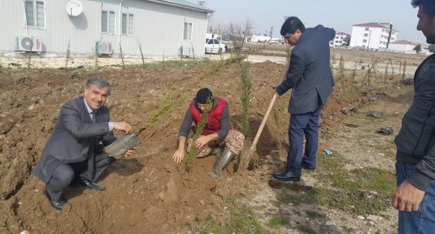 Samsat'ta Ağaçlandırma Çalışması Yapılıyor