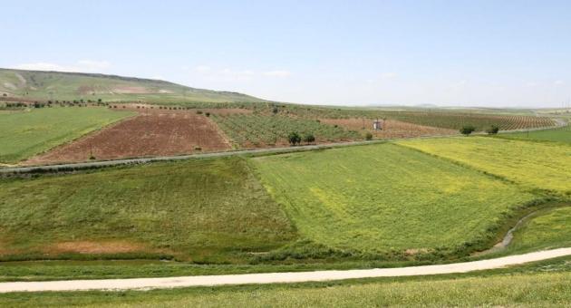 Şanlıurfa Ve Mardin'de Arazi Toplulaştırma Çalışmaları DSİ Genel Müdürlüğü Yetkisinde