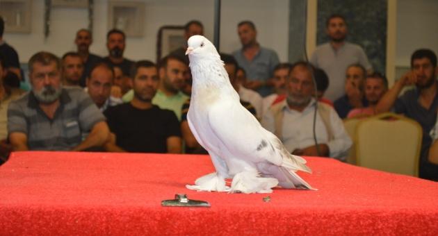 Şebap Güvercin Sevdalıları Adıyaman'da Buluştu - Videolu Haber