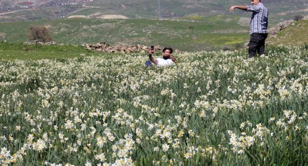 Yaban Nergislere Yerli Turist Akını